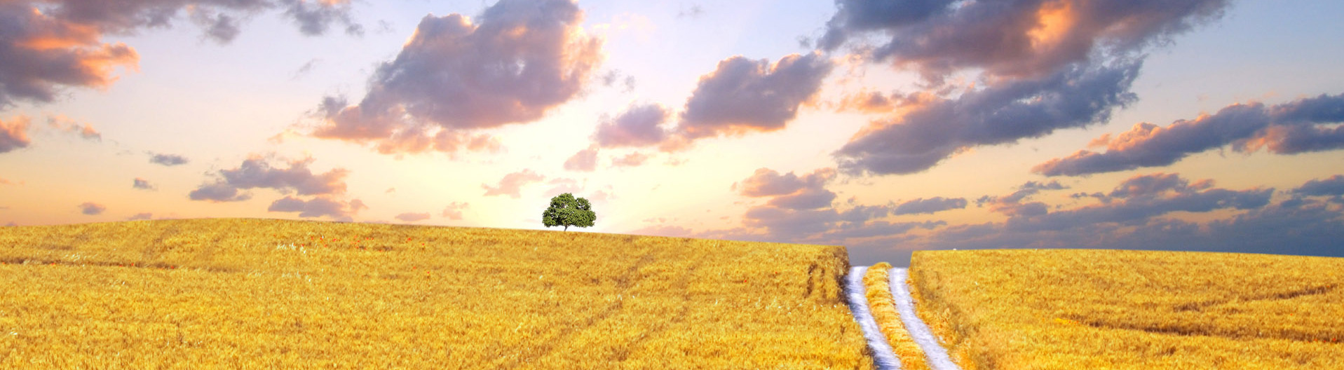 FreeGreatPicture.com-7351-hd-wheat-crop-material-header